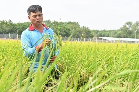 Tây Ninh: Nỗ lực vượt khó khăn, đạt các mục tiêu, kế hoạch xây dựng nông thôn mới
