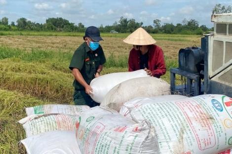 Hội Cựu Chiến binh Long Thành Nam: Chung tay giúp hội viên gặt lúa