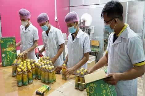 Hướng tới phát triển cây dược liệu bền vững