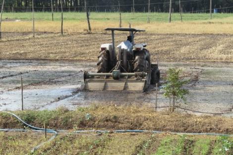 Nông dân nỗ lực vượt khó để tái sản xuất