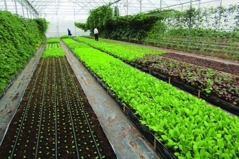Xây dựng chuỗi cung ứng nông sản, thực phẩm an toàn giữa Tây Ninh và Thành phố Hồ Chí Minh