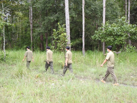 Quyết tâm không để rừng phòng hộ bị xâm hại