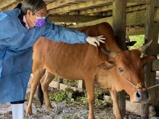Tăng cường công tác phòng chống dịch bệnh động vật trong bối cảnh dịch bệnh Covid-19