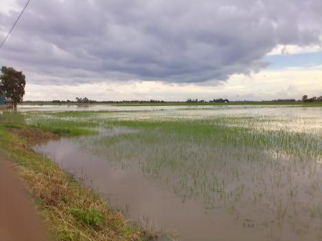 Mưa lớn gây thiệt hại lớn về nhà ở và cây trồng