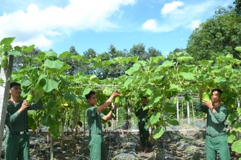 Đại đội 105 Ban CHQS huyện Tân Biên: Tăng gia sản xuất nâng cao đời sống bộ đội