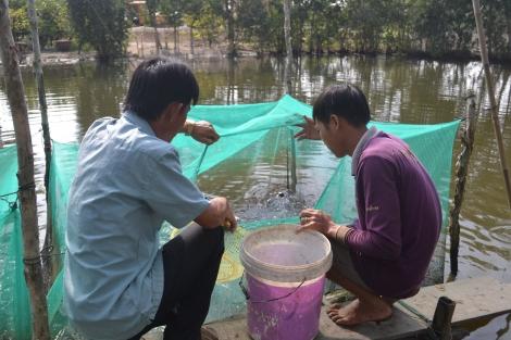 Thành lập HTX Dịch vụ Nông nghiệp - Nuôi trồng thủy sản Tràm Cát