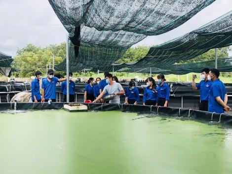 Đoàn viên, thanh niên huyện Châu Thành học tập mô hình nuôi cá chạch lấu