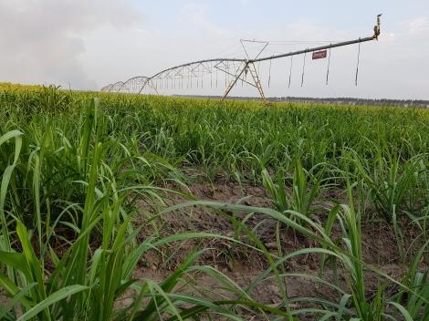 Công ty Cổ phần Thành Thành Công – Biên Hòa: Triển khai chính sách đầu tư vụ trồng 2021-2022