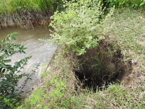 Người dân kiến nghị xử lý dứt điểm tình trạng khó thoát nước tại kênh tiêu T15