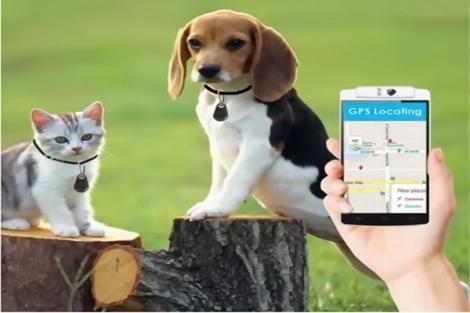 Người nuôi chó, mèo cần thực hiện đúng quy định pháp luật chăn nuôi