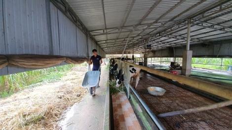 Chiến lược phát triển chăn nuôi trên địa bàn tỉnh giai đoạn 2021 – 2030 và tầm nhìn 2045