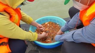 Thả bổ sung hơn 527.000 con cá giống vào hồ Dầu Tiếng